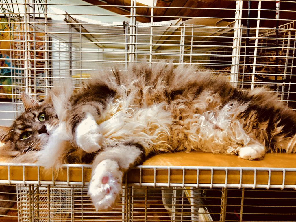 Sleeping Large Gray and Brown Cat
