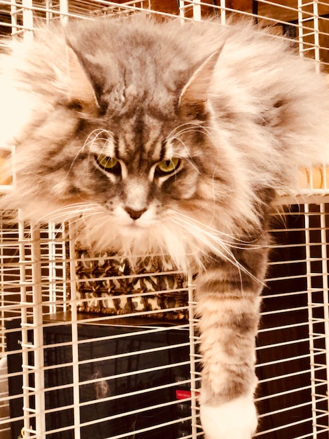 Long-Term Cat Sitting in Illinois