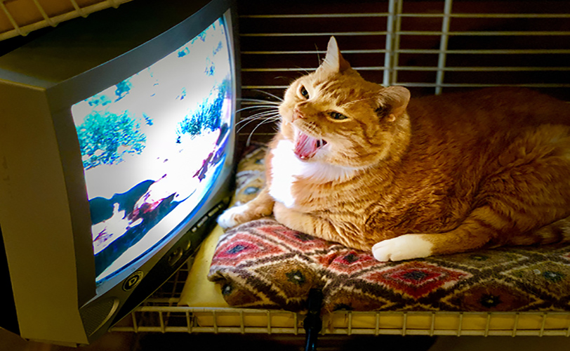 Orange Cat Watching TV