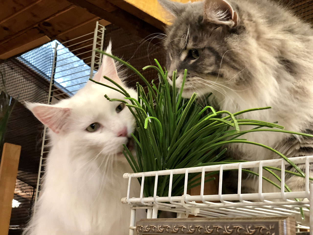 Two Cats with Green Plant