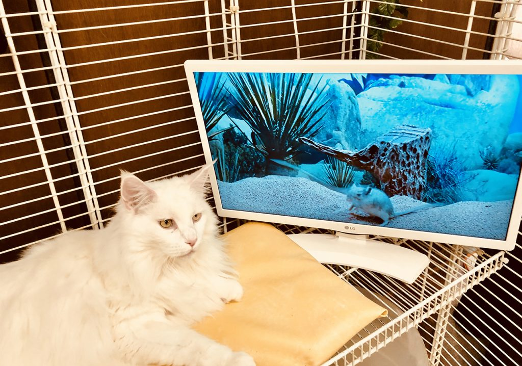 Cat Laying by a Screen