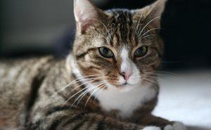 Safe Cat Sitting in Illinois
