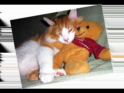 A cat cuddles with a teddy bear.